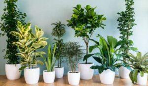 Best Indoo Plants