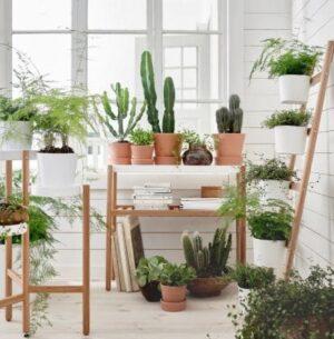 Ideas Plant Wall Decorations To Provide Extra Freshness min