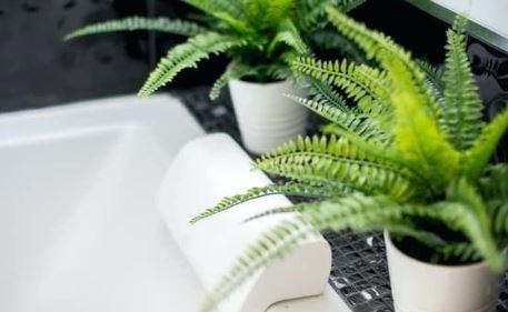 Best Bathroom Plants Low Light