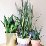 12 Best Bedroom Plants With Low Light