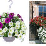 9 Best Plants for Hanging Garden Must Consider