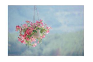 9 Best Plants for Hanging Garden Must Consider 2
