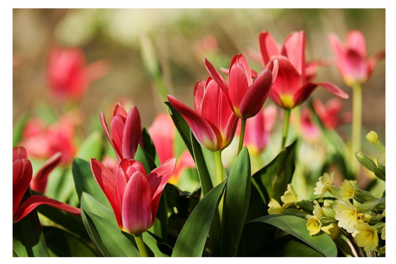 Best Garden Lilies Types For Summer