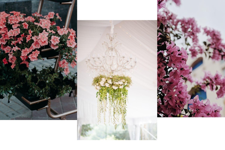 Best outdoor hanging plants for full sun