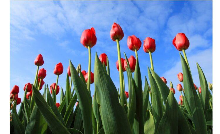 Bulb Garden Design Ideas Must Know Before Start
