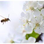 Honey Bee Garden Design Must Know Before Start