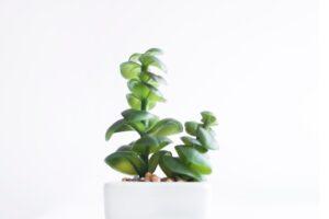 Best Indoor Succulents for Office