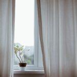 Best indoor Plants for Oxygen Production