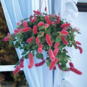 Houseplants for Hanging Baskets 1