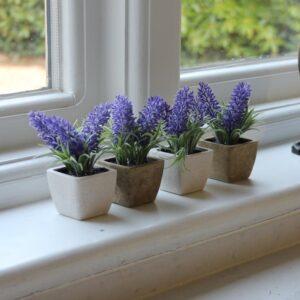 Lavender Best Bedroom Plants for Oxygen