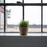 Houseplants for Hanging Baskets