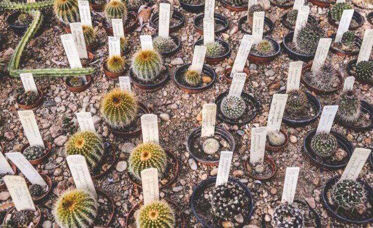 List of Low Maintenance Outdoor Succulents 1