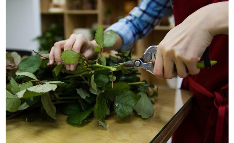 Rose Garden Maintenance Tips Must Try 1